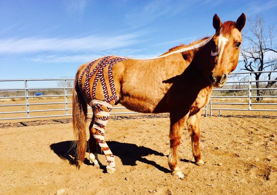 Практическое применение equine-кинезиотейпирования